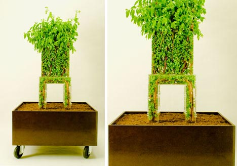 Grow A Natural Wood Chair