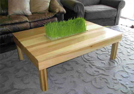 Indoor Grass Table
