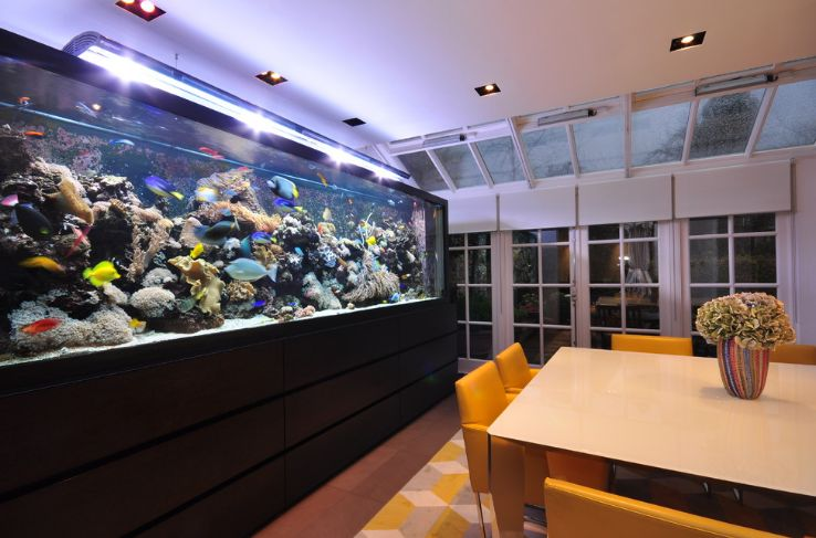 Dining room aquarium with a big impact
