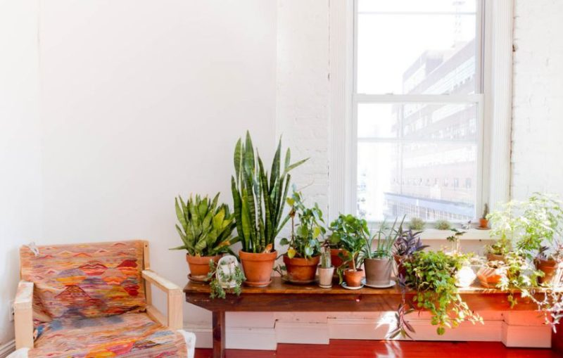 Simple Ways To Purify The Air In Your Home