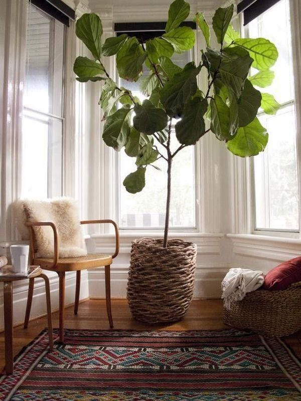 7 stylish ways to use indoor plants in your home 39 s d cor for Plant decorations home