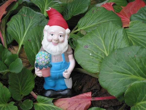 Gnome In Garden: Garden Gnomes
