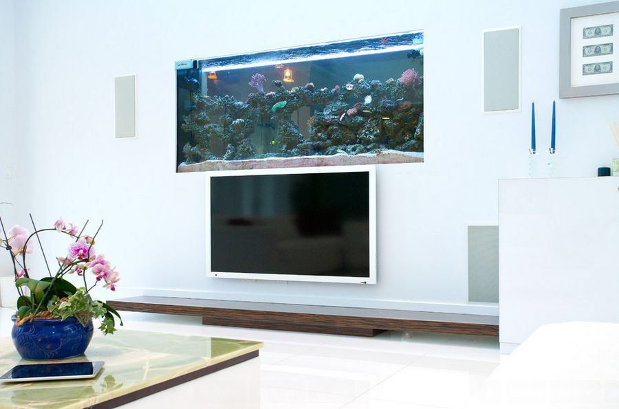 Where to place the fish tank in the house for Fish tank house
