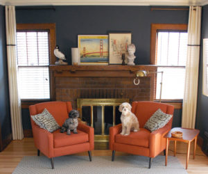 How To Have A Pet-Friendly Home That's Also Chic And Stylish