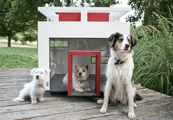 Extravagant dog house for your furry friend