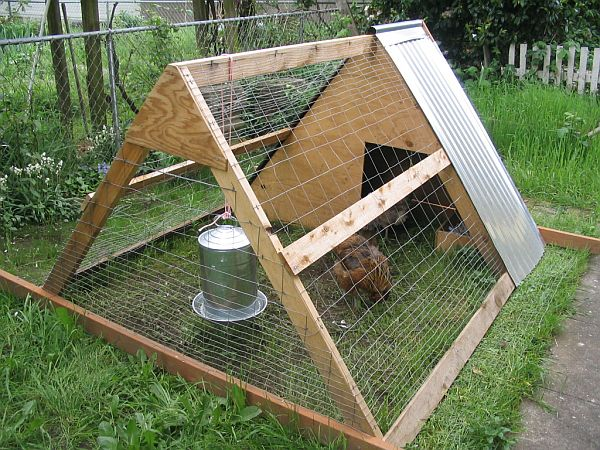 Do It Yourself Chicken Coop