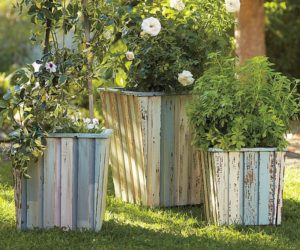 Wood barrel planter collection
