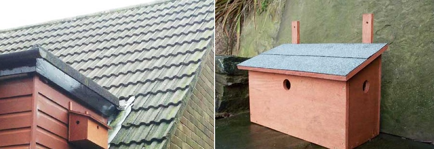 Cute three-bedroom house for birds