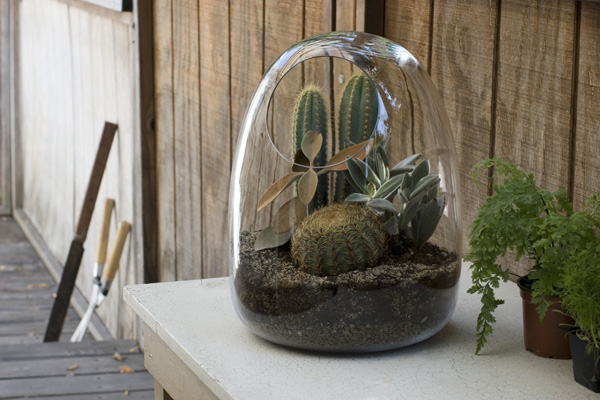 Hand blown glass terrariums from bevara design - Composiciones de cactus ...