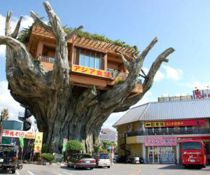 Strange Banyan Tree House Café in Japan