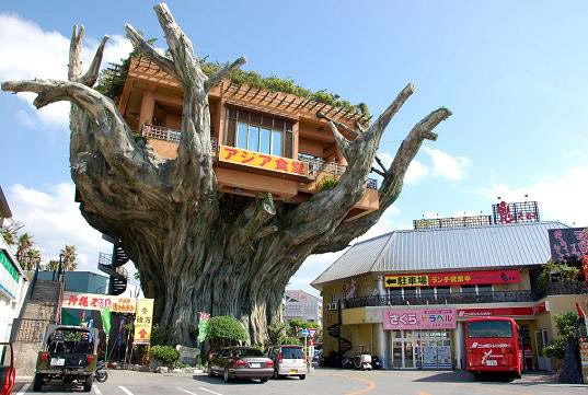 strange banyan tree house caf in japan - Most Expensive Tree House In The World