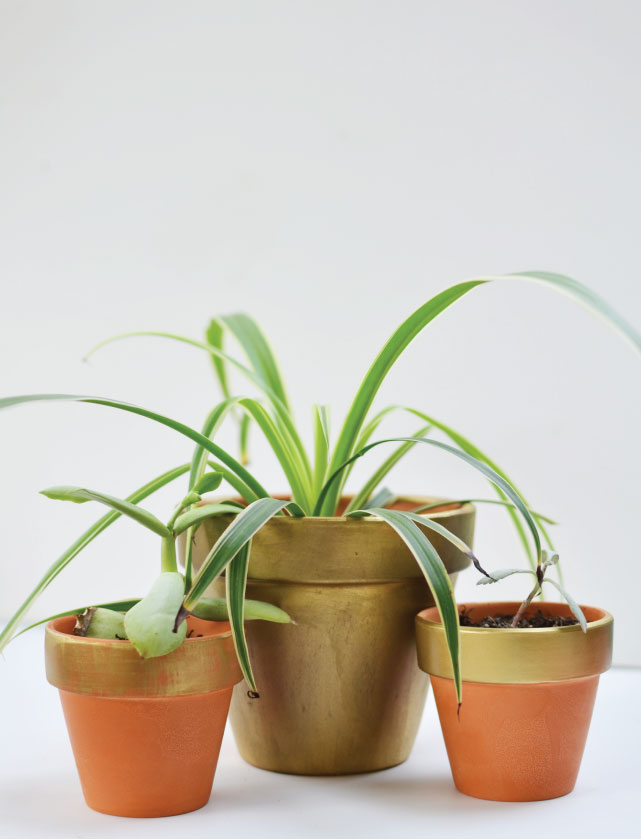 Gold terracotta planter