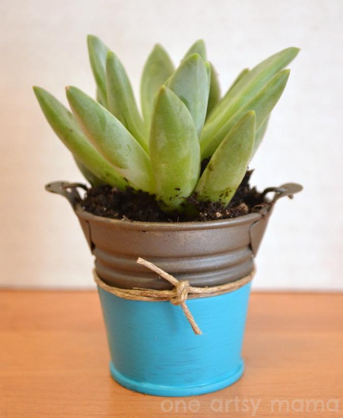 Succulent planter bold dipped paint