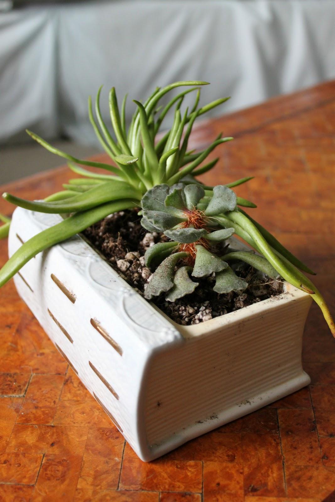 Succulent planter scent