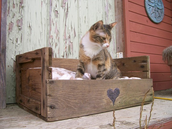 Cat bed from pallets