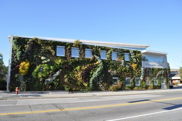 The Buildings Also Benefit From The Coolness And Shade Offered By These Green  Walls Which Purify The Air And Protect The Building From The Heat Of The  Sun ...