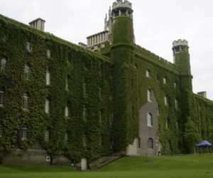 Back to Green – the Benefits of Ivy Facades