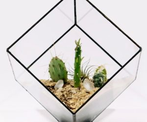 Glass Cube Planters from Score+Solder