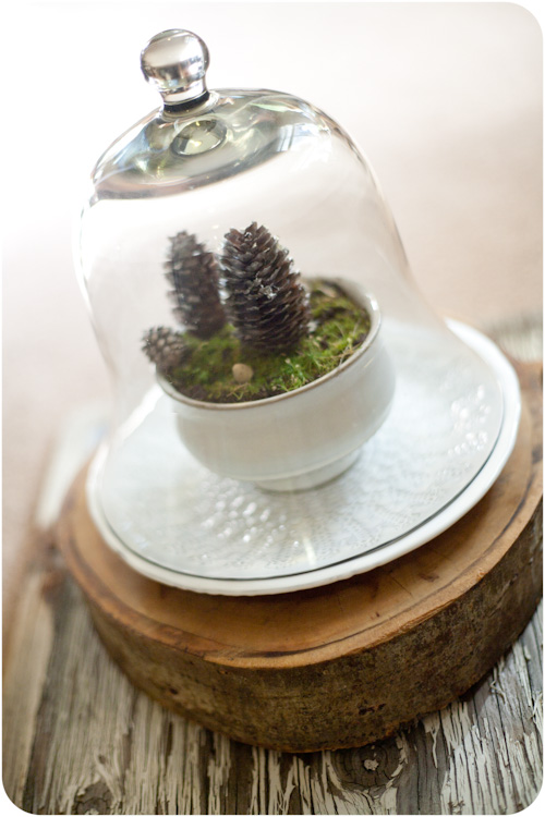 diy-winter-terrarium-to-bring-some-nature-in-your-home-2