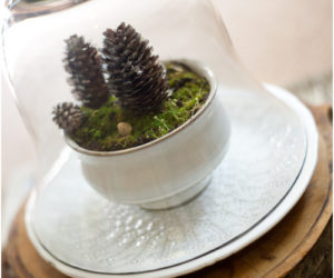 Decorative Winter Terrariums You Can Make Using Everyday Objects