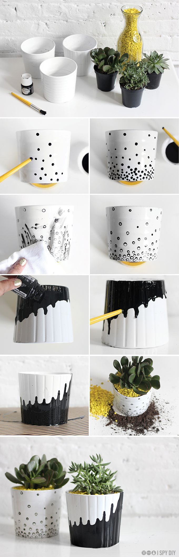Black and white flower pots succulent