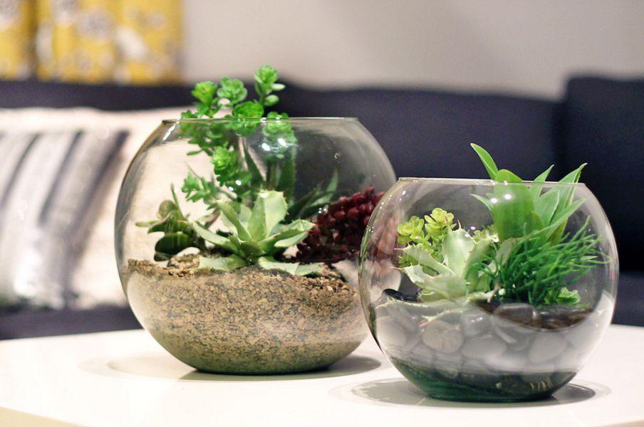 Globe terrariums