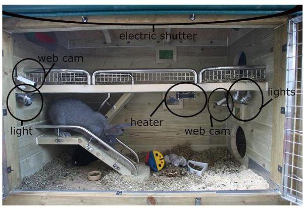 Ingenious Rabbit Hutch Worth 163 10 000