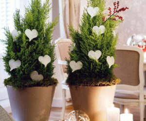 Creative indoor plants decors for Christmas & New Year