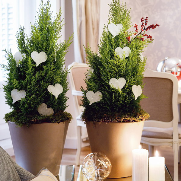 Creative indoor plants decors for christmas new year - Home deco ...