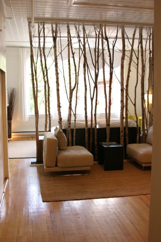 use birch for room dividers