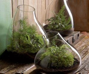 Amazing Recycled Glass Terrariums