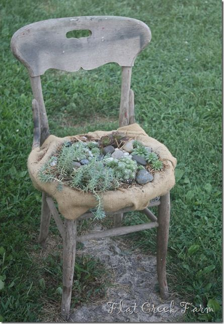 Succulent old chair