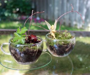 Build Your Own Terrarium To Capture Nature's Beauty