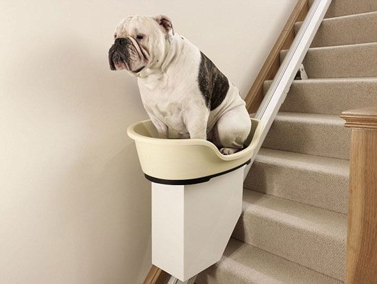 Charmant Expensive Dog Stair Lift