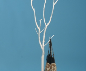 Ghost Tree Coat Rack