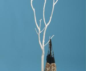 Ghost Tree Coat Rack