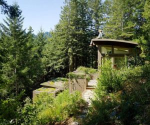 Into the woods Mill Valley cabins