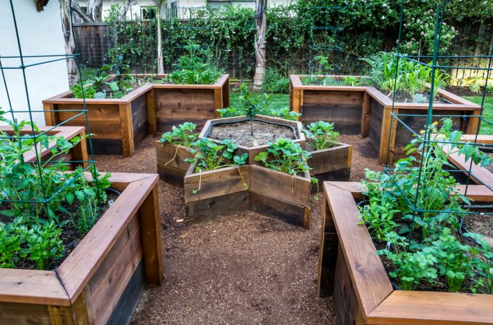 raised vegetable beds project for garden