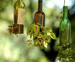 Innovative wine bottle hanging planters