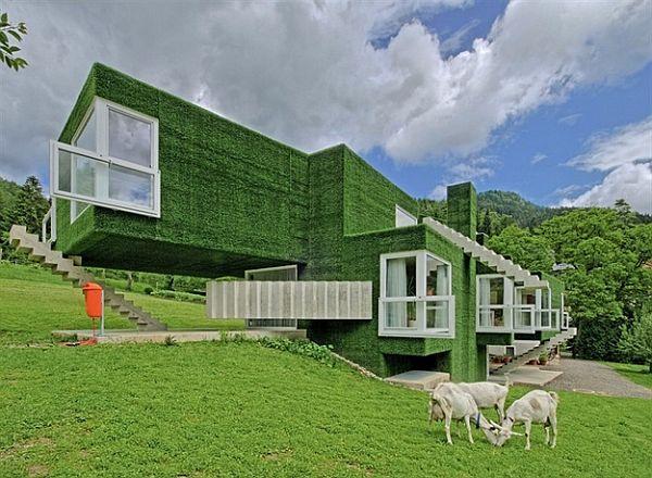 zielony dom i kozy