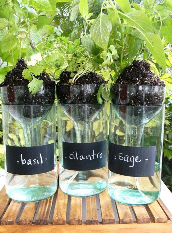 Basil planter