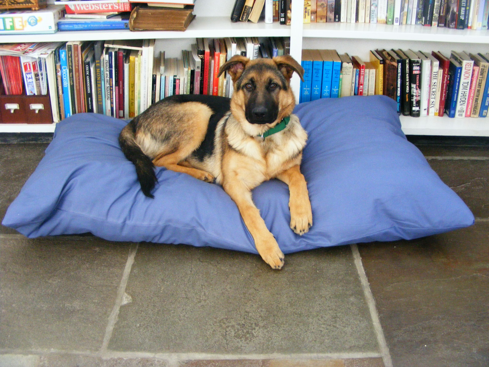 Blue dog pillow diy