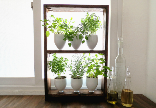 DIY herb garden indoor