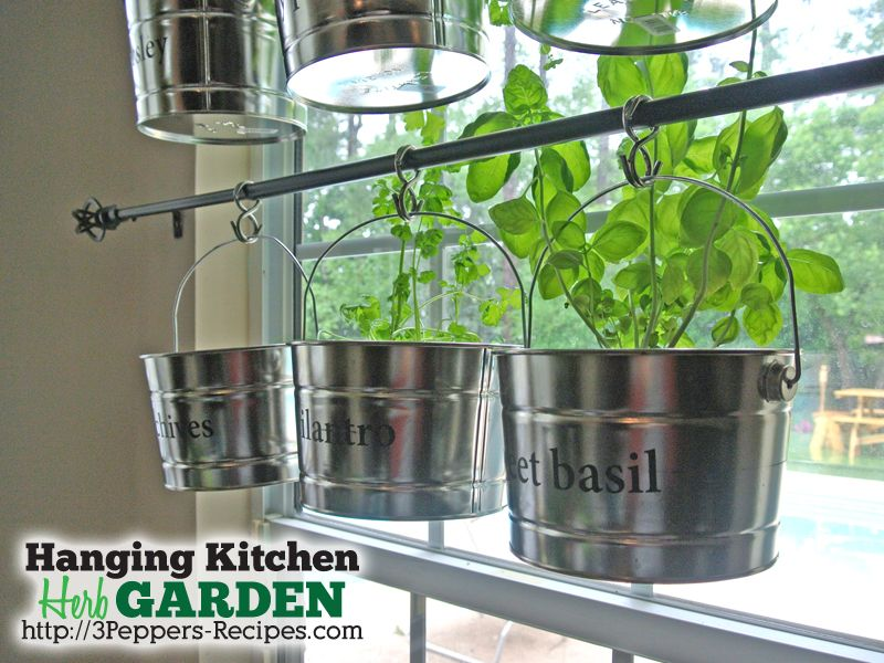 Hanging kitchen herb
