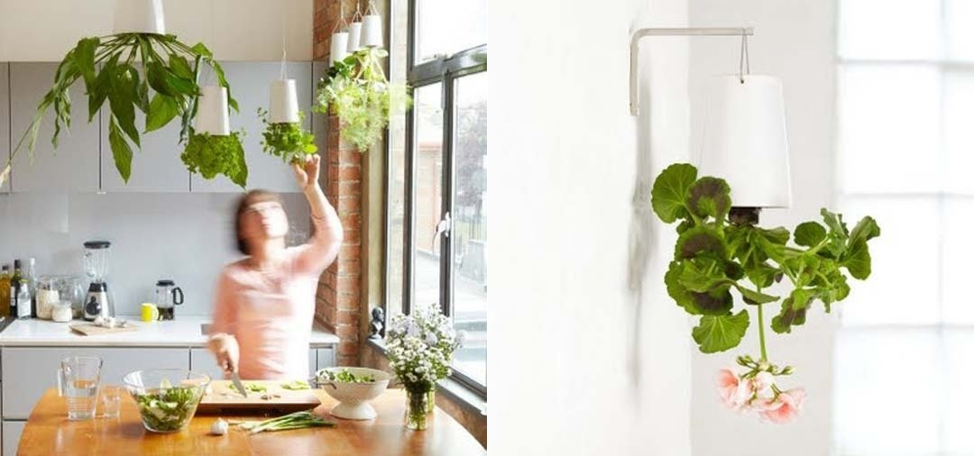 Modern hanging herb above the kitchen island