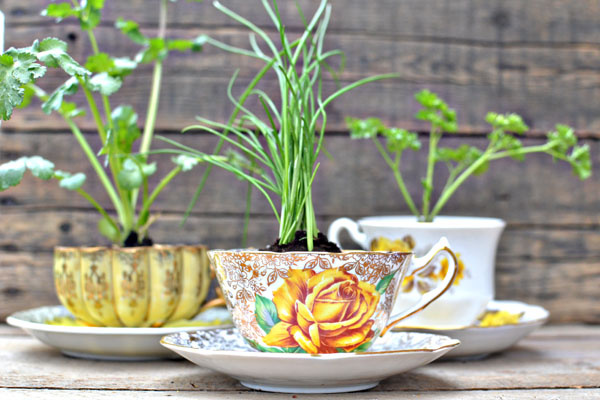 diy herbs in a teacup