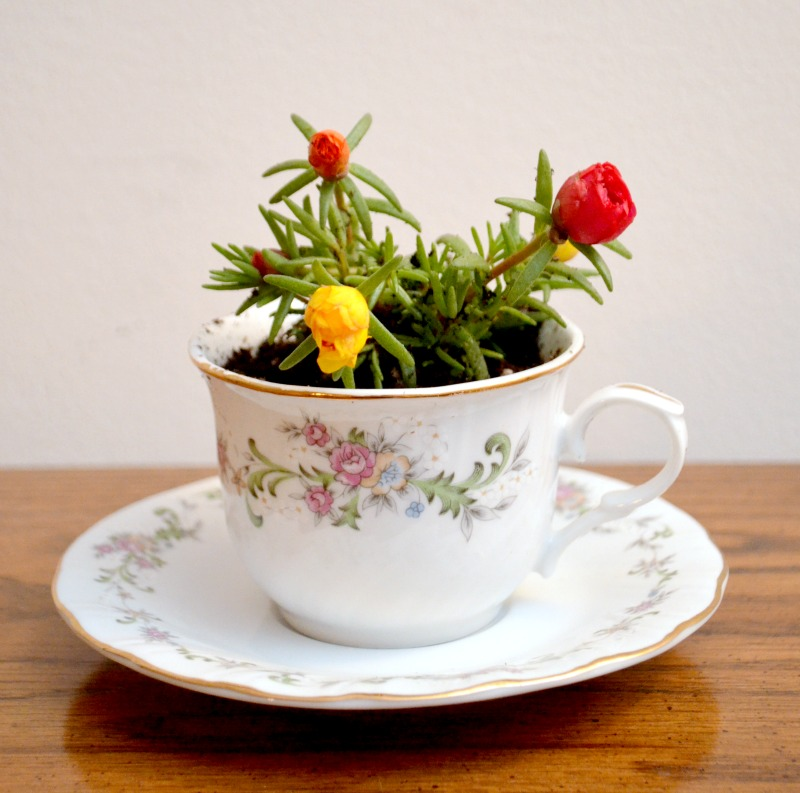 small teacup flower planter