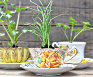 When Tea Cups Become Flower Pots – cute transformations