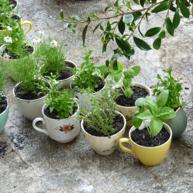 teacup planters with colorful design