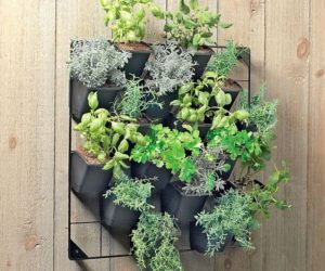 Eco friendly vertical wall garden